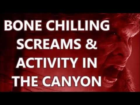 BONE CHILLING SCREAMS & ACTIVITY IN THE CANYON!
