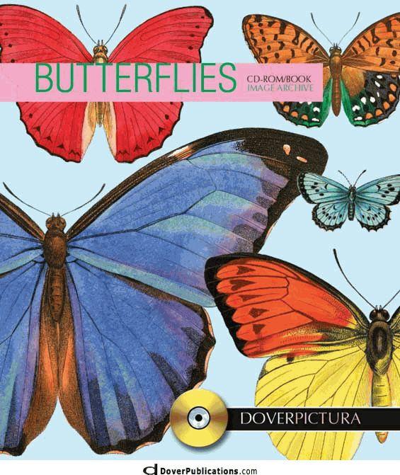 Butterflies  Beautiful pictures