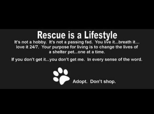 Animal rescue pinterest lifestyle well said quotes and pets