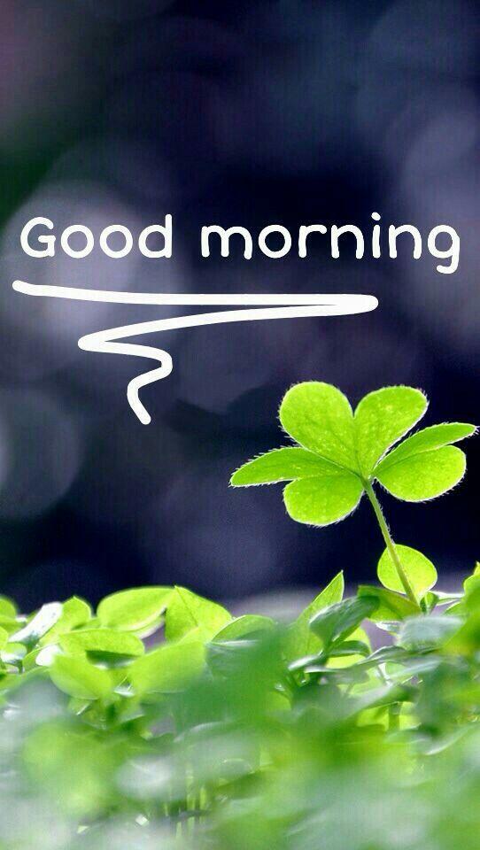Guten Morgen Good Morning Buenos Dias Lied : Best spanish good morning ideas on pinterest
