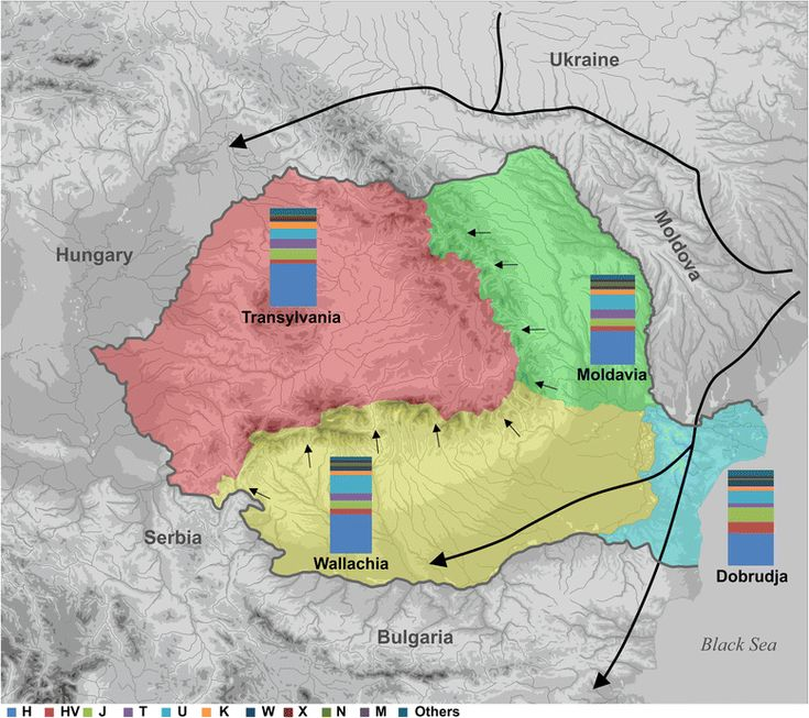 A recent study that looked at the DNA of the Romanian provinces population showed Transylvania population was closely related to Central European groups.