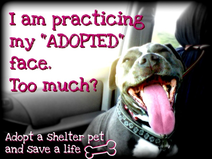 If you adopt a dog they will be so happy because you saved their life and are going to be their happily ever after.  dog rescue