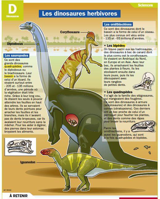 Fiche exposés : Les dinosaures herbivores