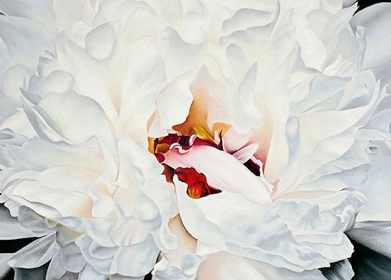 White Peony Fine Art Inkjet Print.  8x12.  Pastel Painting Giclee Reproduction of a white peony blossom by PRPhotographyAndArt.