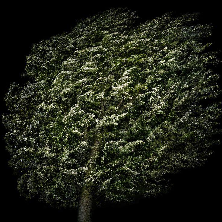 alberi | Irene Kung