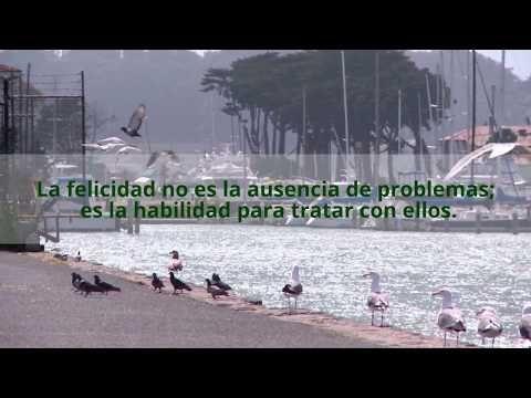 VIDEO MENSAJES VARIOS