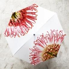Umbrella - UM004 - Pincushion Protea @ Africandy