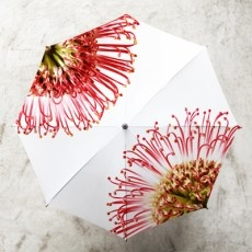 Umbrella - UM004 - Pincushion Protea @ Africandy