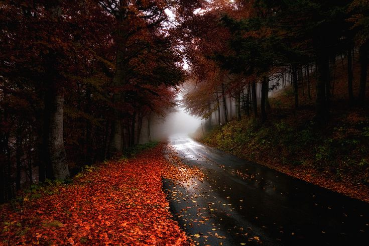 nice roadFavorite Places, Autumn Leaves, Runners World, Fall, Beautiful, Marathons Training, Fit Inspiration, Fit Motivation, Roads