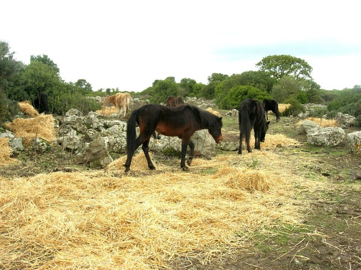 Wild Horses in Tuili