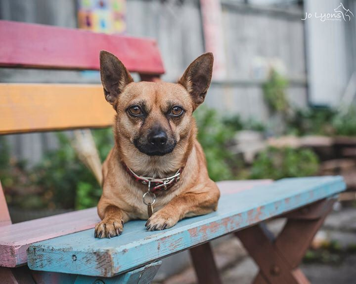 """Tonight I'd like to introduce you to Lucky. I find it very odd how so many dogs surrendered to the pound are named """"Lucky"""" ... what the hell is that? Anyway, this Lucky lived up to his name when he was swept away from Renbury Farm Animal Shelter by Sydney"""