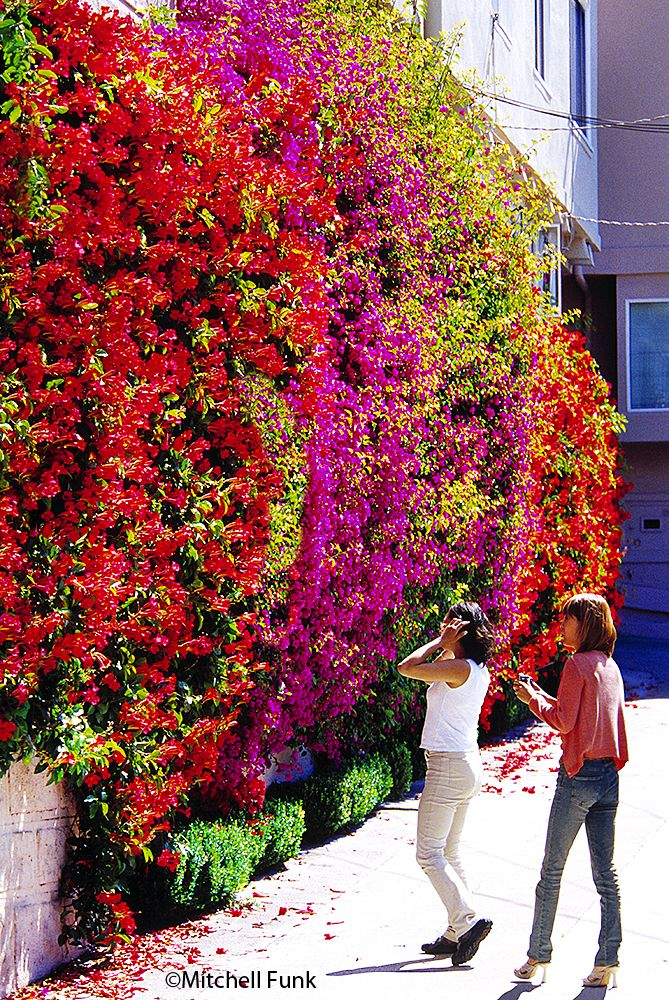 Flowers On Wall In Ally On Russian Hill, San Francisco By Mitchell Funk www.mitchellfunk.com