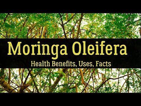 Moringa Oleifera - Facts. Uses, Health Benefits, Side Effects