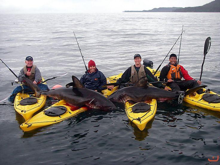 Salmon Shark fishing in kayaks