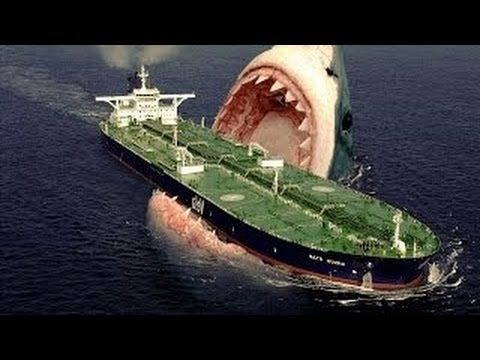 Documentales de animales EL MEGALODON existe - Tiburones DOCUMENTAL anim...
