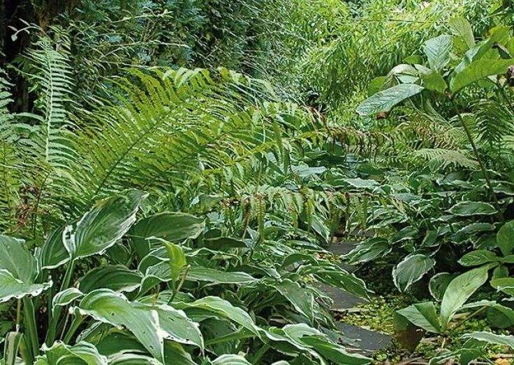 Plantes de sous-bois - F. Marre - Rustica - Jardin de Maizicourt (80)