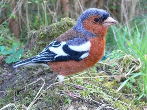 Chaffinch by Eve O'Neill