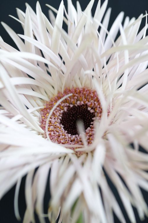 1000+ images about All the Pretty Flowers on Pinterest ...