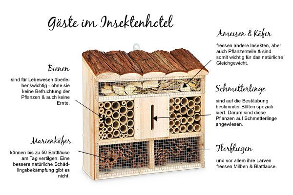Diese Insekten nisten, überwintern und brüten in Eurem Insektenhotel. Wie schön ♥