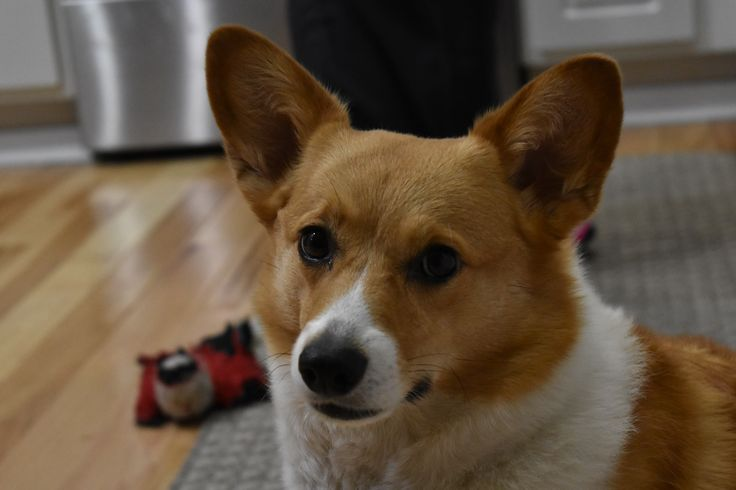 http://ift.tt/2yMeGt8 a DSLR maybe for my honeymoon... but also maybe to take pictures of my Corgo...