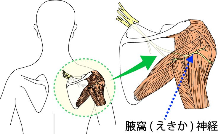 脇のところを解剖学用語で「腋窩(えきか)」と言いますが、「腋窩(えきか)神経」とはその脇を通っている神経を指します。 首の骨(頚椎)の上から5番目・6番目のところから枝となって分かれてきた神経です。「三角筋」「小円筋」という筋肉を動かす指令を送る 肩の外側の感覚情報を伝える 役割をしています。  「腋窩(えきか)神経」に障害が出た場合、  「三角筋」「小円筋」が正常に働けなくなる 肩の外側の感覚が触られてもわかりにくくなります(感覚障害)。
