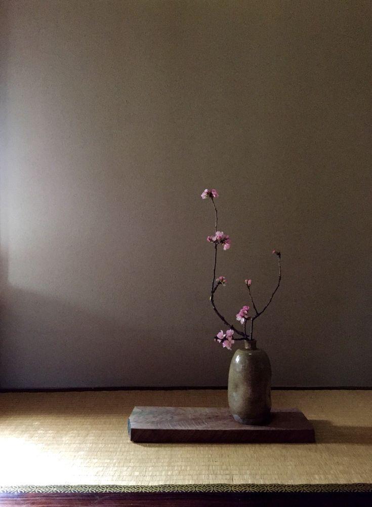 Cherry blossoms Spring 2015 Ikebana by Nolita Jpn