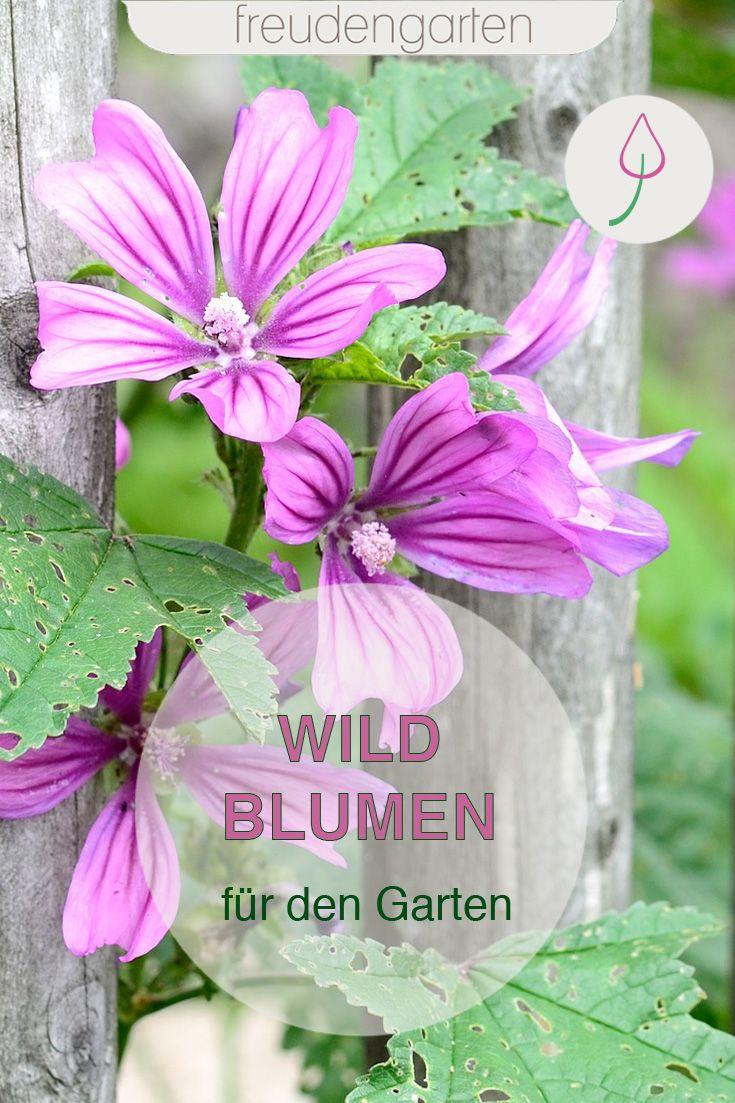 14 Wildblumen Fur Den Garten Garten Bienenfreundlicher Garten Blumenbeet Anlegen