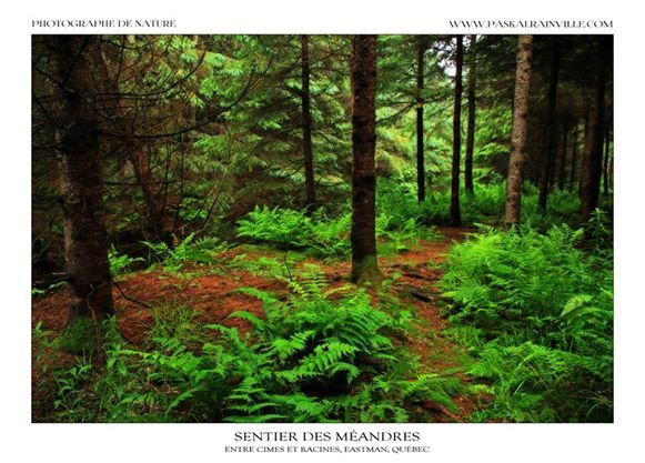 Sentier des méandres Prise à Eastman, Québec, Canada http://www.paskalrainville.com/