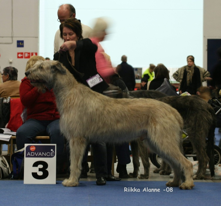 One of my cost of living correspondents breeds Irish Wolfhounds. She occasionally sends me pictures