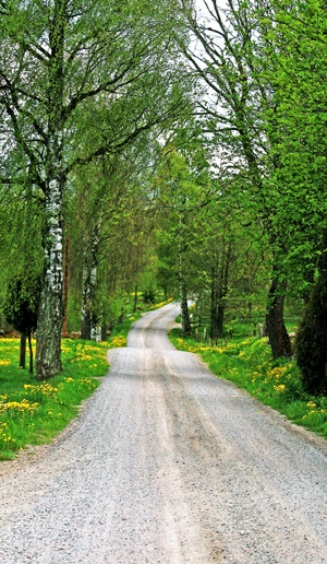 Gravel road in Småland, Sweden