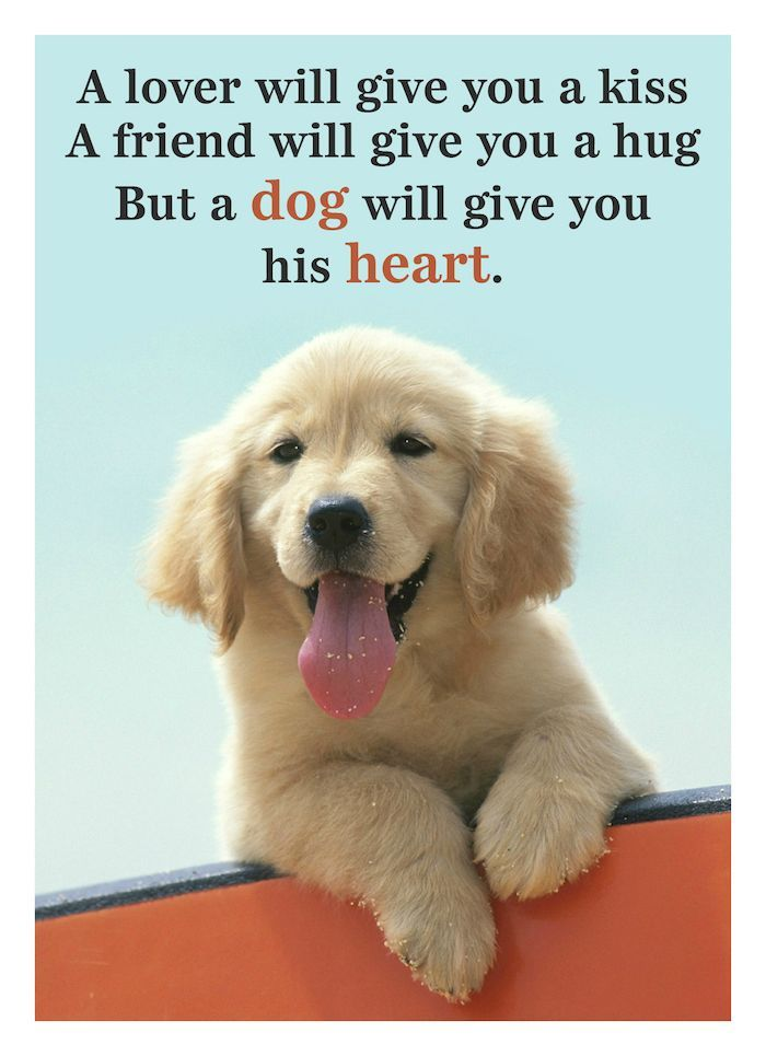 15+ Inspirational Quotes All Dog Lovers Should Know | Dog lover quotes,  Love your pet day, Dog quotes