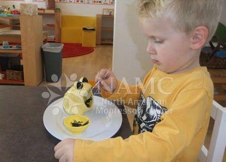 26 best images about montessori motor skills and movement for Montessori fine motor skills