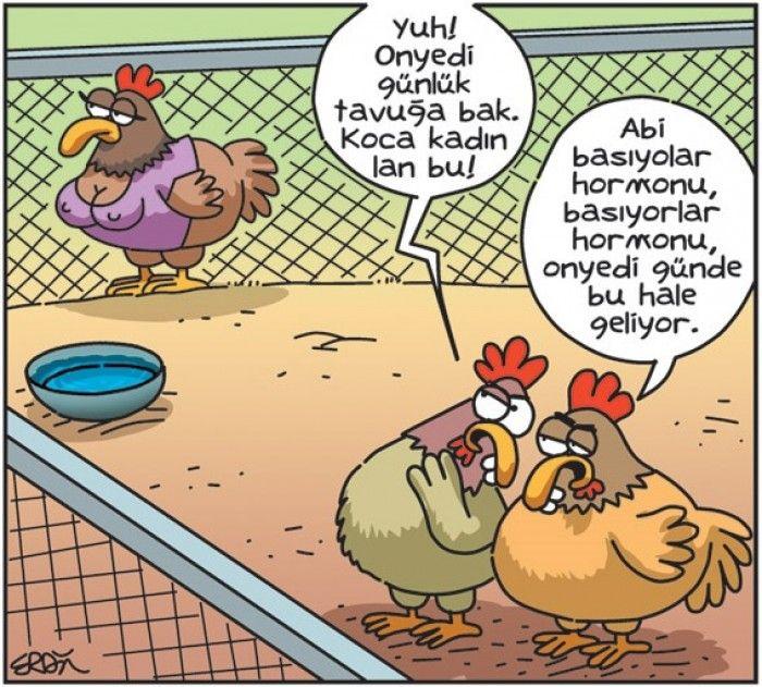 Tavuk Karikaturu Komik Karikatur Mizah