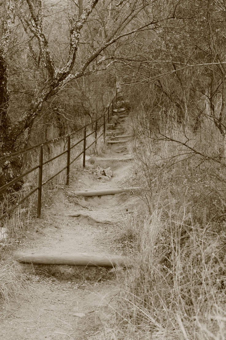 Walking trail at the botanical gardens - Johannesburg, South Africa / -for #travel info,tips and inspiration, visit itsoneworldtravel.com