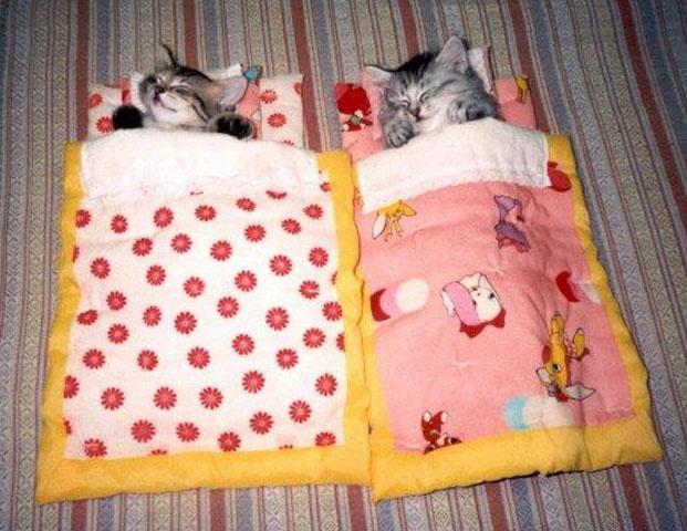 : Cats, Sleep Bags, Funny Cat, Sleeping Bags, Slumber Parties, Cat Naps, Kittens, Kitty, Animal
