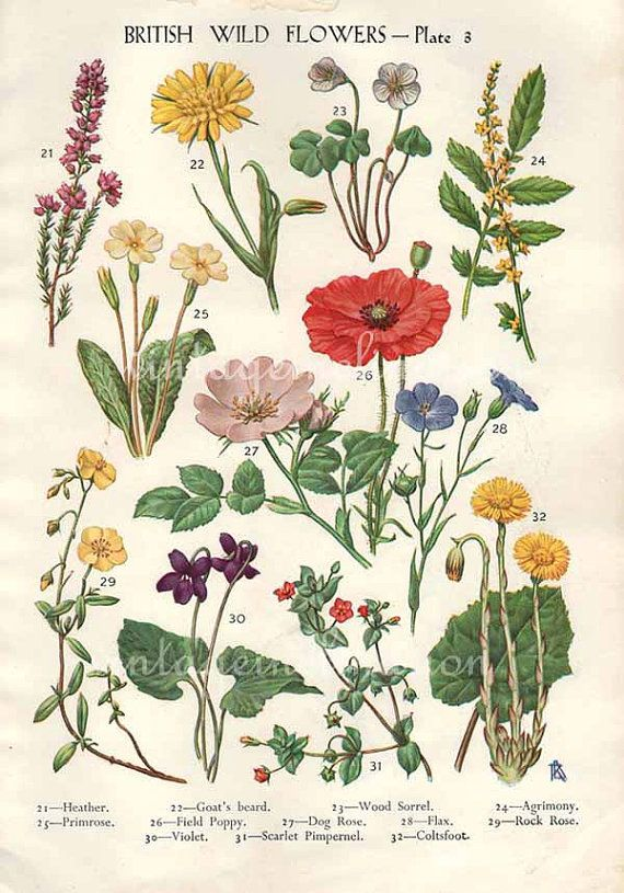 Antique Botanical print British Wild Flowers bookplate:  http://www.etsy.com/listing/96118044/antique-botanical-print-british-wild