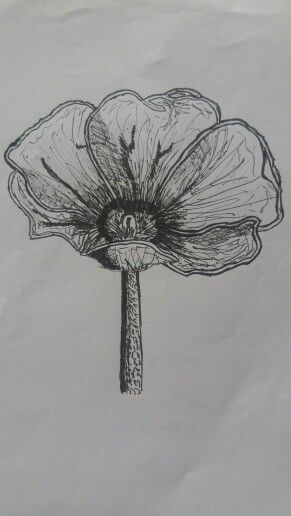So many meanings behind flowers, death, happiness, love and truth. #drawing