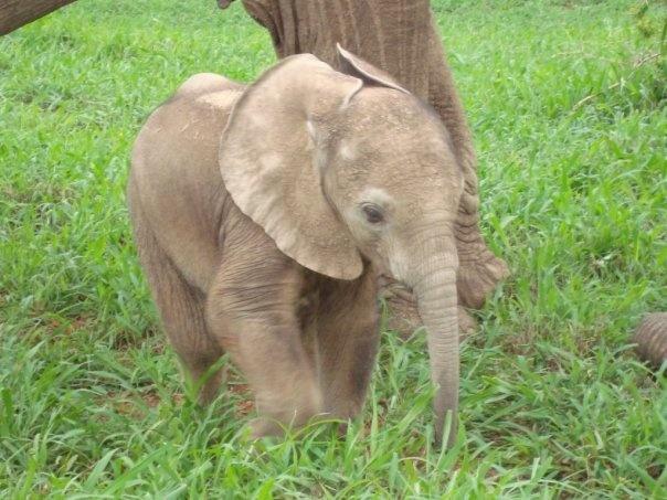 Really cute baby elephant!