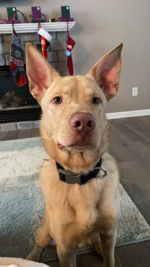 Adoptable Dogs Mn Animal Rescue Wags Whiskers Animal Rescue In 2020 Dog Adoption Wags And Whiskers Animal Rescue