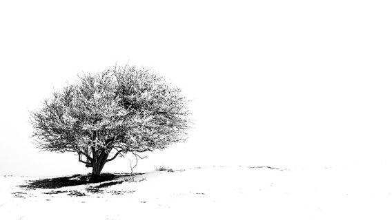 Nieuw in mijn Werk aan de Muur shop: Eenzame boom in de sneeuw 2