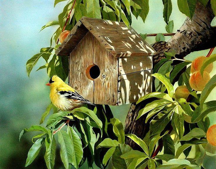 Птички. – 191 фотография