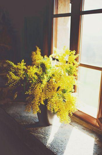 Women's day. Mimosa flower. Decorazione casa con fiori. Mazzo di fiori giallo. Home decor