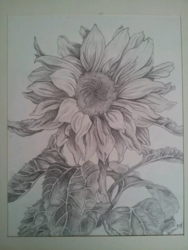 Drawings Of Sunflowers In Pencil 1000+ images about Dra...