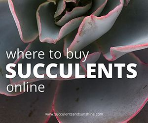 Wondering where to buy succulents? After buying quite a few succulents lately, I wanted to share some of my favorite places. There are so many options!