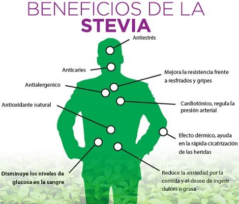 17 Best images about Stevia on Pinterest | Gardens