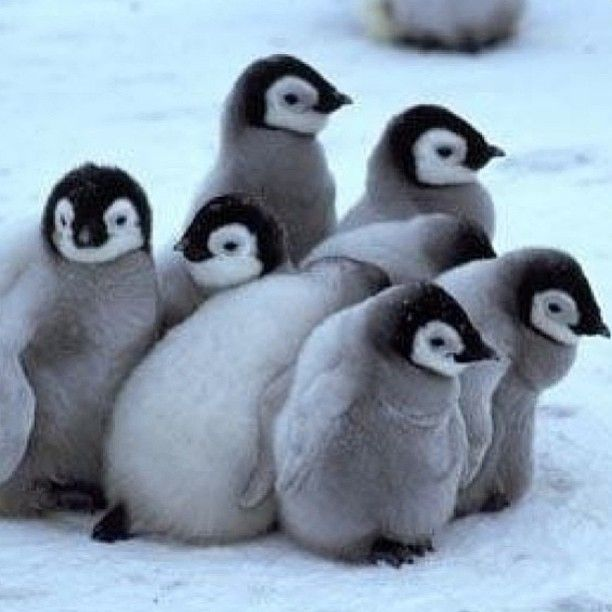 8 Best Images About Penguin On Pinterest Home Baby