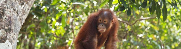 Taman Negara - Experience the wonder of Malaysia's largest national park.