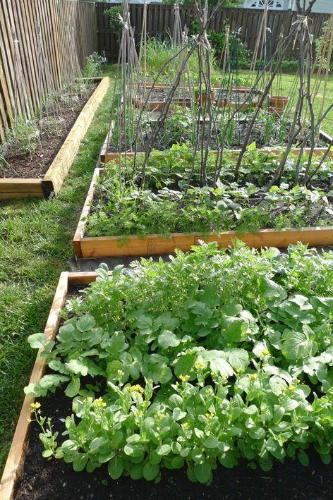 Best 25+ Vegtable garden layout ideas on Pinterest Vegtable