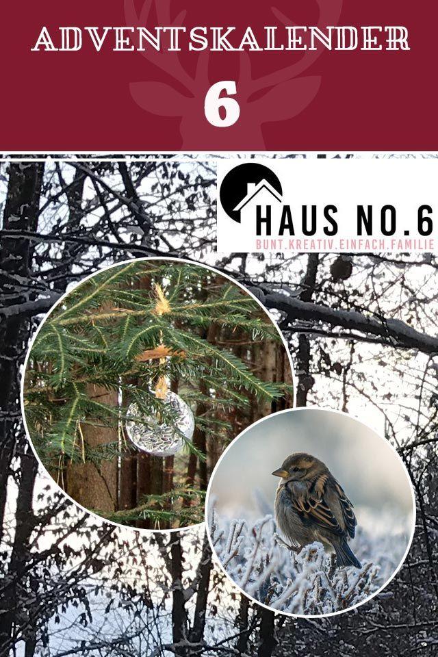 """⭐ Adventskalender Türchen 6⭐  Vera und Norman vom Blog """"Haus No. 6"""" stellen Euch heute ihren ganz persönlichen Weihnachtsbrauch vor: Einen Weihnachtsbaum für die Vögel 🐦 im Wald dekorieren --> https://www.garten-und-freizeit.de/magazin/weihnachtsbaum-fuer-waldbewohner"""