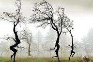 Fire Dancer Dreaming Tree's